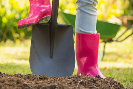 gum boots: Woman wearing pink rubber boots using shovel in her garden