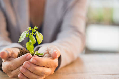 people: Close up of hands holding young plant on wooden table