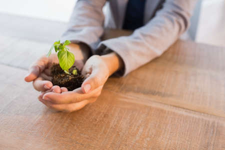green office: Close up of hands holding young plant on wooden table