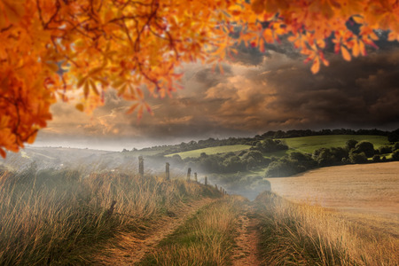 fall trees: Autumn leaves against country scene Stock Photo