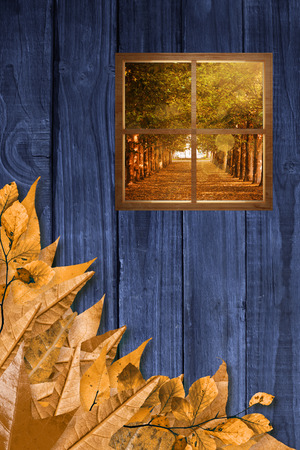 wood window: Square shape glass window against autumn leaves on wood