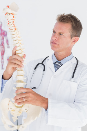 inquiring: Doctor holding an anatomical spine in medical office