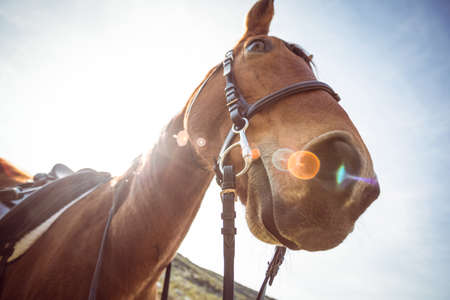 rein: Low angle view of horse in the countryside LANG_EVOIMAGES