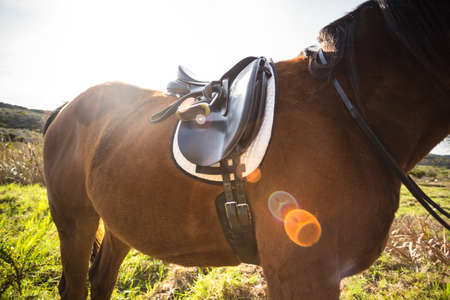 thorough: Thorough bred horse with saddle in the countryside