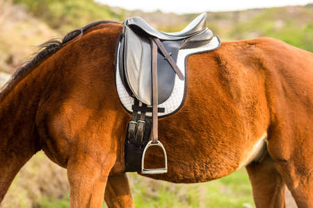 saddle: Saddle on a horse in the countryside