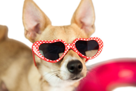 gafas de sol: Perro lindo con las gafas de sol del coraz�n en el fondo blanco Foto de archivo