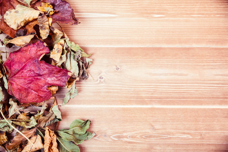 copy space: Autumn leaves with copy space overhead shot