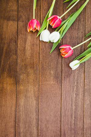 coloured background: Few red and white flowers on wood desk
