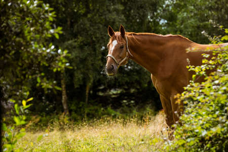thorough: Side view of thorough bred horse in the countryside