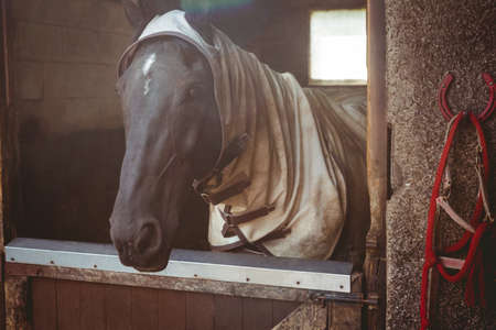 thorough: Horse with blanket in stable in the countryside