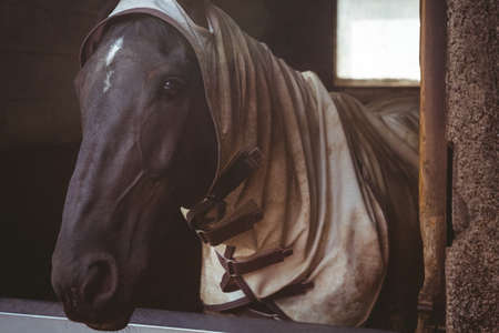 blanket horse: Horse with blanket in stable in the countryside