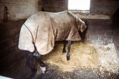 blanket horse: Horse with blanket eating straw in the countryside