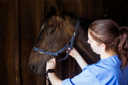 reigns: Female vet adjusting reigns in the countryside