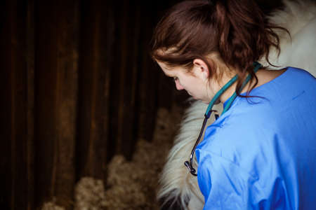 countryside loving: Vet examining horse in stable in the countryside
