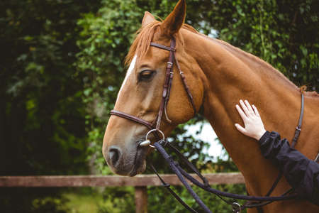 reigns: Cropped image of hand of female rider rubbing horse in the countryside LANG_EVOIMAGES