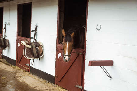 thorough: Horse in stable of equestrian centre in the countryside LANG_EVOIMAGES