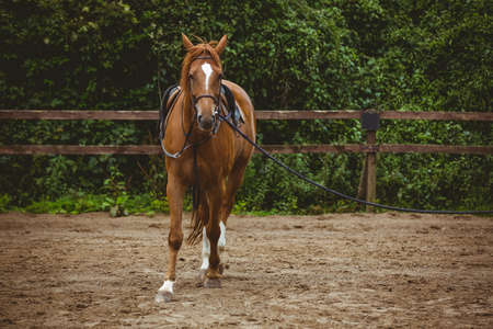 reigns: View of horse cantering in the countryside LANG_EVOIMAGES