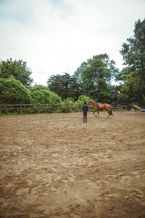 cantering horse: Female rider training her horse in the countryside LANG_EVOIMAGES