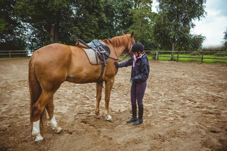 reigns: Female rider grooming her horse in the countryside LANG_EVOIMAGES