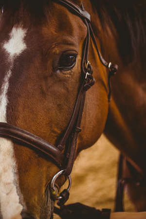 reigns: Close up view of horse in the countryside