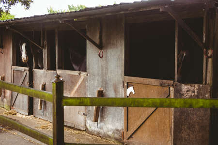 thorough: View of stable in farm in the countryside