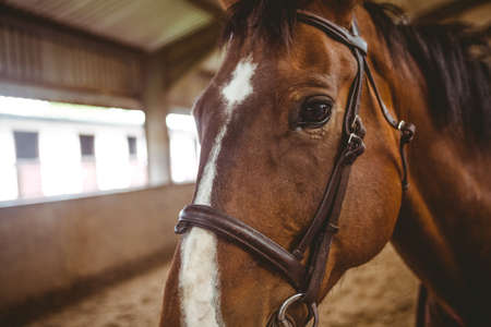 reigns: Close up view of horse in paddock in the countryside