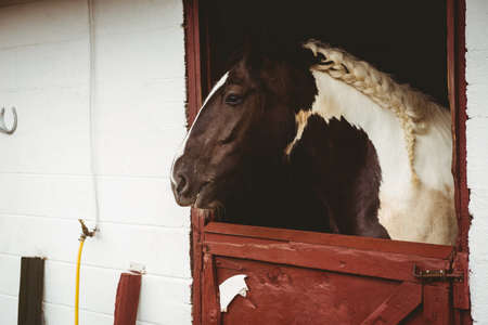 thorough: Horses in stable of equestrian centre in the countryside LANG_EVOIMAGES