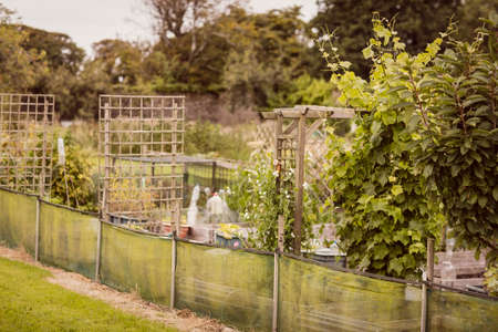 country living: Footage of garden with plant in the countryside