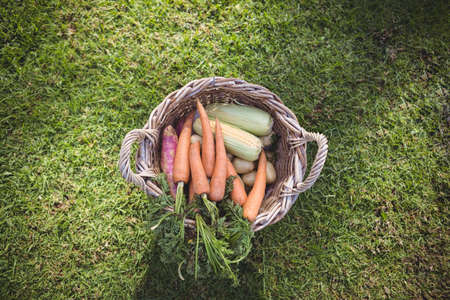 an overview: Overview of fresh basket of vegetables outside
