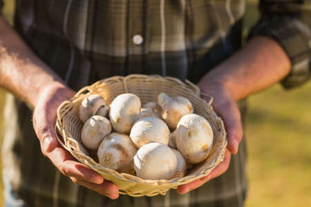 country living: Man holding basket of mushrooms in the park