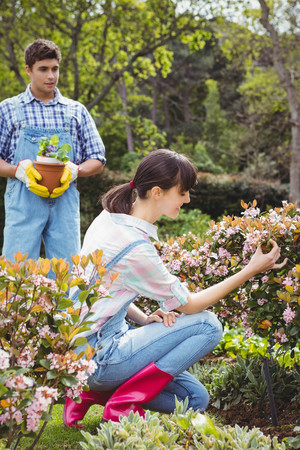 maintaining: Cheerful couple maintaining plants in garden