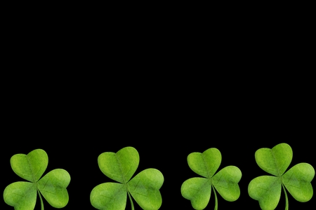 saint patty: Picture of shamrock on black background