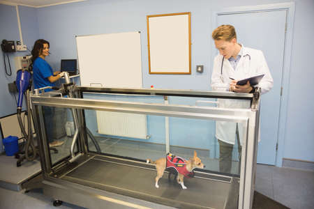 hydrotherapy: Vets looking at a dog on hydrotherapy treadmill in vets clinic