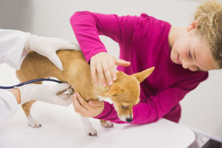 petting: Girl petting her pet dog while vet examining in clinic
