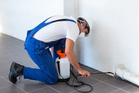 insecticide: Manual worker spraying insecticide on pipe against wall