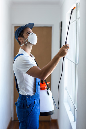 Side view of worker using pesticide on window at home Stock Photo