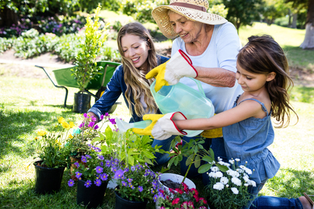 family gardening: Multi-generation family gardening in the park on a sunny day