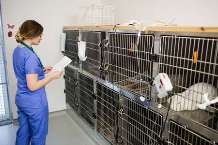 rabbit in cage: Vet monitoring sick rabbit in cage at clinic LANG_EVOIMAGES