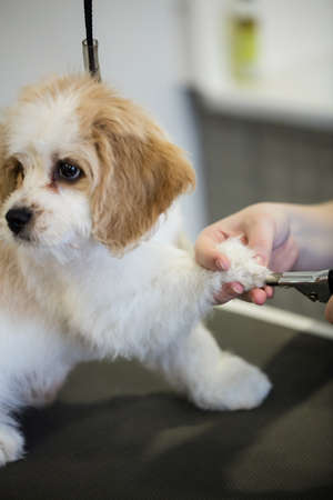 trim: Dog getting nail trim by vet in clinic
