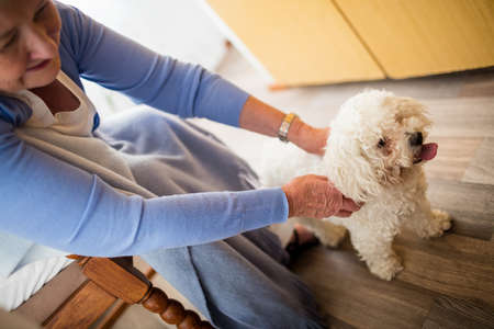 sheltered accommodation: Senior woman playing with dog in a retirement home