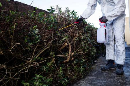 crop sprayer: Pest control man spraying pesticide in garden