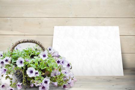 against white: Flowers against white card