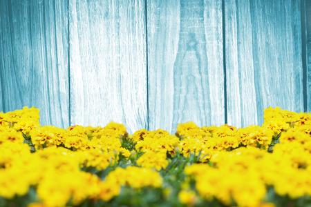 Fiori gialli contro un muro.