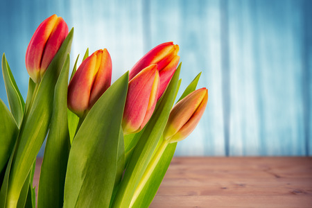 chat room: Tulip against a wall