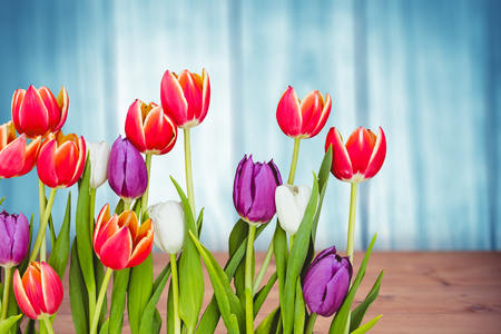 chat room: Flowers against a wall Stock Photo