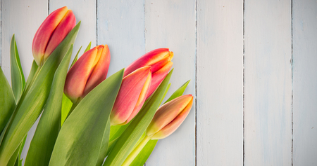 casual business team: Tulips against wooden planks