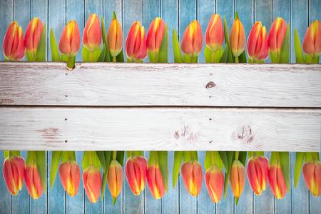 applauding: Tulip flowers against wooden planks