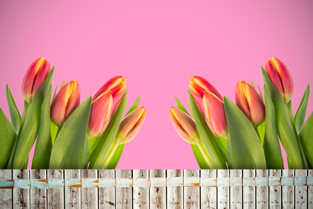 applauding: Tulip flowers against wooden background in pale wood