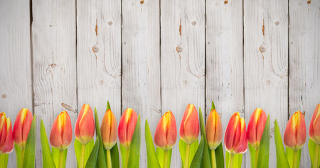 applauding: Tulip flowers against wooden background