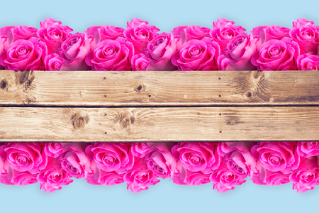 wooden planks: Pink flowers against wooden planks